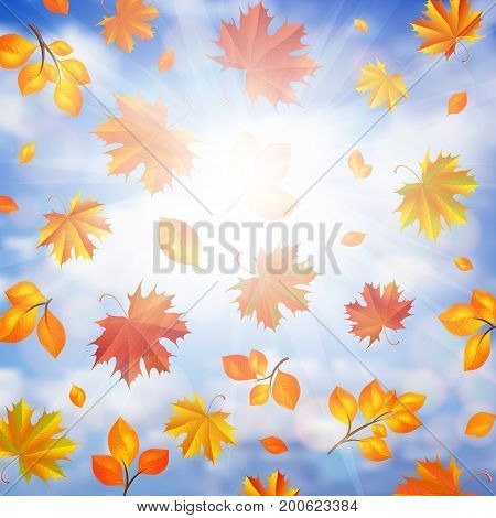 Illustration of colorful autumn leaves and cloudy sky background