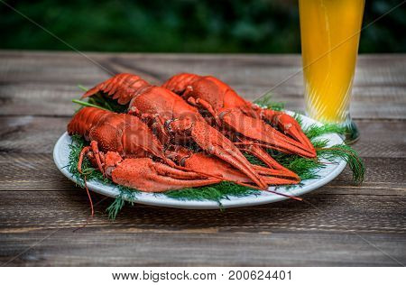 Boiled red crawfish on a white plate with green fennel on a wooden background. Tasty red steamed rawfish closeup on wood table, seafood dinner, nobody. Copy space for your text.