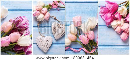 Collage with spring tulips flowers. White and pink spring tulips pink ribbon two decorative hearts on blue wooden background. Spring site header.