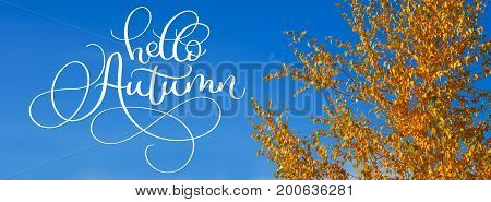 Hello Autumn calligraphy lettering text on Yellow leaves on autumn trees against the blue sky.