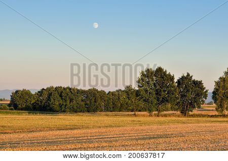 Evening summer landscape. Trees on the fields and the moon in the sky.