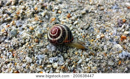 Snail crawling on the sand and fine stones