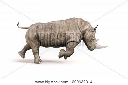 Rhino on white background. This is a 3d render illustration
