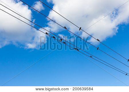 birds fly to free in to the sky. Russia, Ural.