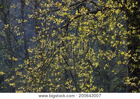 View of the spring forest in french Alps
