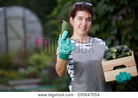 Portrait of young woman agronomist with crop of cucumbers in box on background of garden