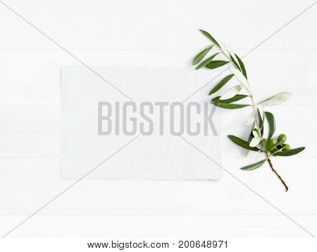 Styled stock photo. Feminine wedding desktop mockup with green olive branch and white empty paper card. Foliage composition on old white wooden background, top view. Flat lay picture.