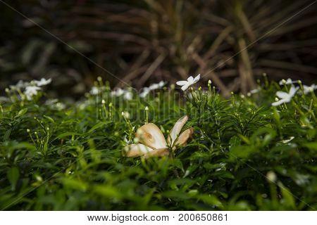 flowers growing on green meadow macro image