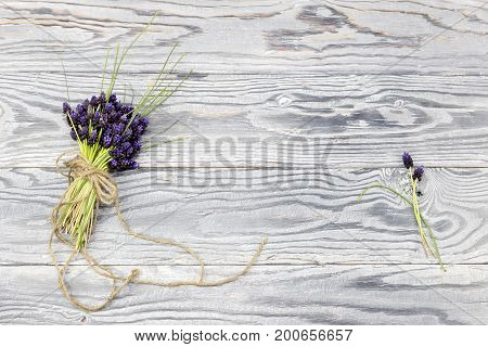 The wild muscari on a wooden background close up