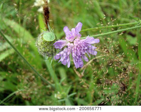 Laud und Wanze sonnen sich auf einer Wiesen-Blume