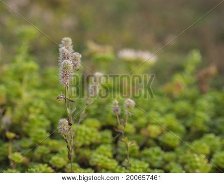 close up blooming grass with soft blurry gree background