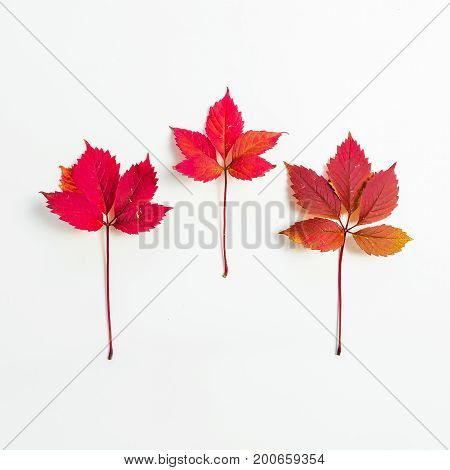 Autumn leaves flat lay on white background