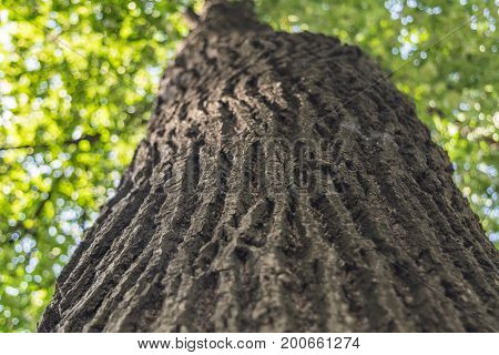 Bottom View Of An Old Tree