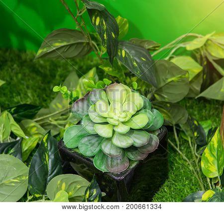 Beautiful artificial agave succulent