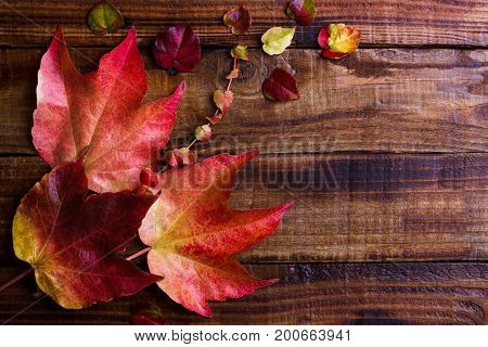 Autumn leaves over dark wooden vintage background with copy space