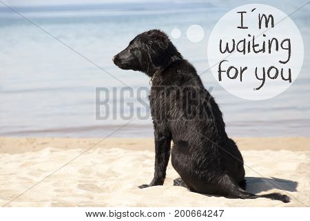 Speech Balloon With English Text I Am Waiting For You. Flat Coated Retriever Dog At Sandy Beach. Ocean And Water In The Background