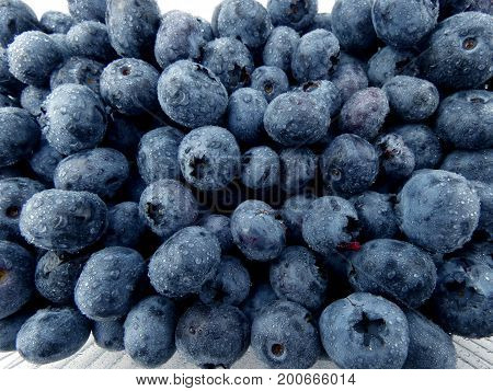 Blueberries macro isolated on white background close up