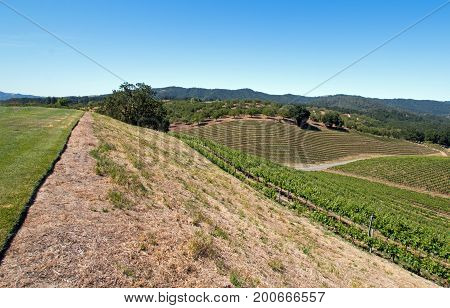 Hill Overlooking Paso Robles Vineyards In The Central Valley Of California United States