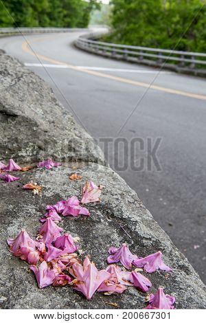 Rhododendron Petals On Side Of The Road