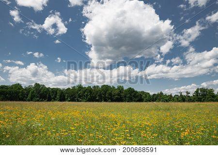 Open field of wild flowers on a beautiful day.