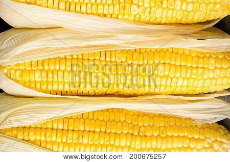 Close up of sweetcorn cob ready for eating