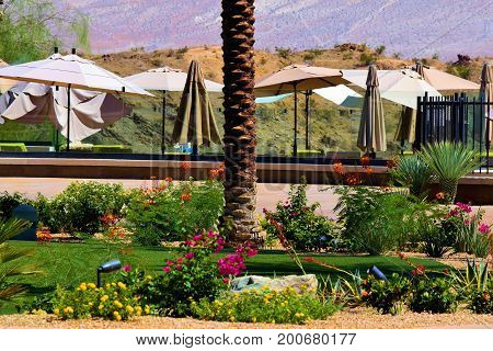 Manicured landscaping including a green lawn, plants, and flowers beside a pool with contemporary umbrellas taken at a residential garden in a desert community