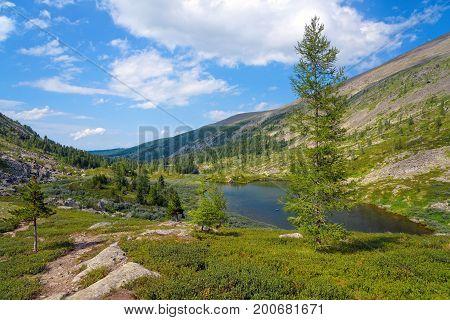 Summer Mountain Landscape: Tall Fir Tree near Deep Cold Tarn (Karakolsky Lakes Altai)