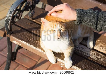 Homeless cat, pet and animals concept - Man caressing cat's head.