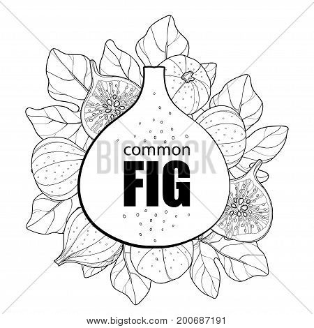 Vector round composition with outline Common Fig or Ficus carica fruit, slice and leaf isolated on white background. Subtropical plant in contour style for exotic summer design and coloring book.