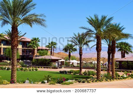 Courtyard with a manicured garden including a green lawn, plants, flowers, and Palm Trees taken in a residential desert community