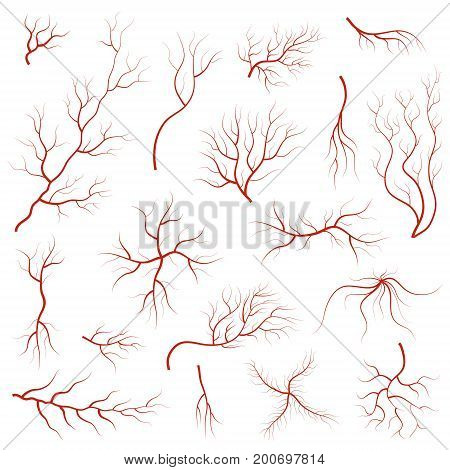 Cartoon Vein Blood Set Concept Human Anatomy Element for Science Flat Style Design. Vector illustration of Veins