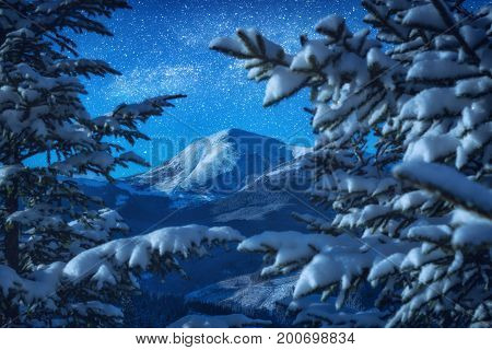 View Of High Mountain Through The Snow Cowered Fir Trees