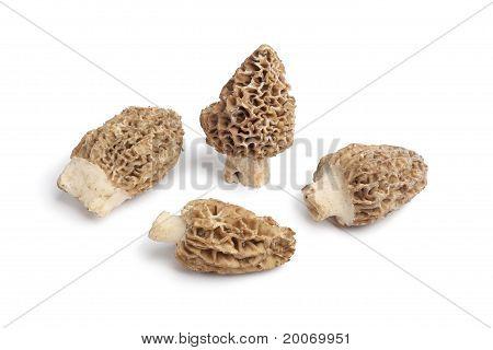 Fresh raw Morel mushrooms