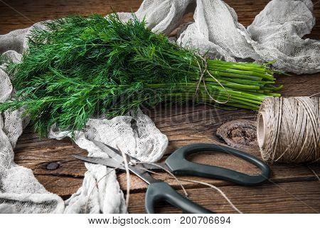 Dill. Fresh Garden Herbs.