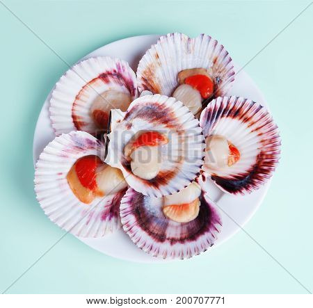 half a dozen fresh opened scallop shell on white plate isolated on light background