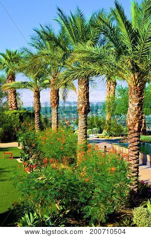 Row of Palm Trees and lush plants surrounding a courtyard taken in a luxurious contemporary style garden