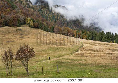 Stana de vale, autumn view