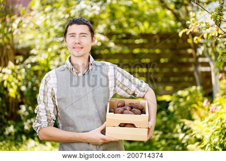 Photo of agronomist with box of potatoes in summer garden