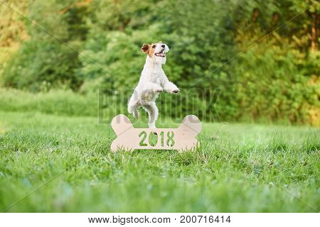 Happy wire fox terrier dog jumping over wooden 2018 sign for new year celebration beginning calendar seasonal festive.