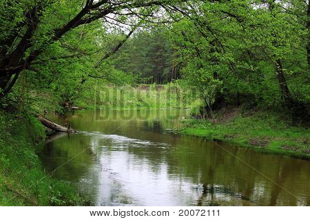 River In Forest At Spring