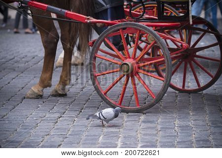 traditional horse-drawn carriage in rome,  italy with a dove in front