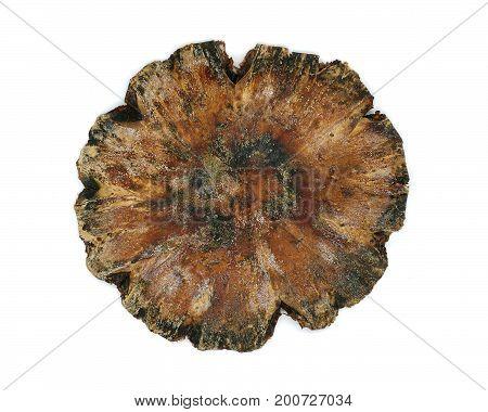 Detail Of Dried Mushroom