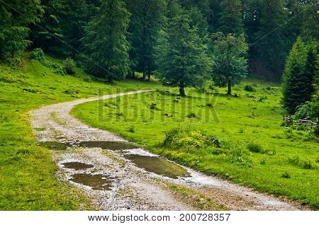 Mountain road after summer rain, mount Beljanica, east Serbia