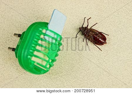 Electric insect repeller and dead brown beetle