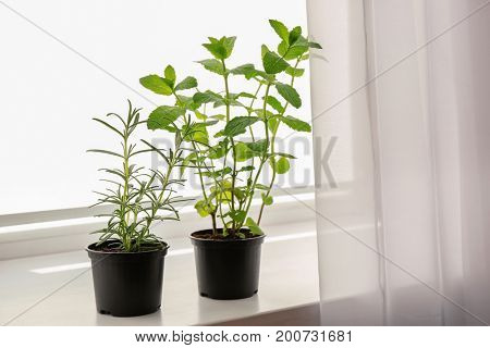 Pots with rosemary and mint on windowsill