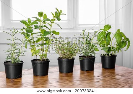 Pots with basil, thyme, rosemary and mint on table