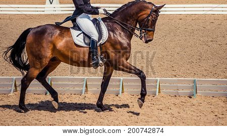 Dressage horse and rider. Brown chestnut horse portrait during dressage competition. Advanced dressage test. Copy space.