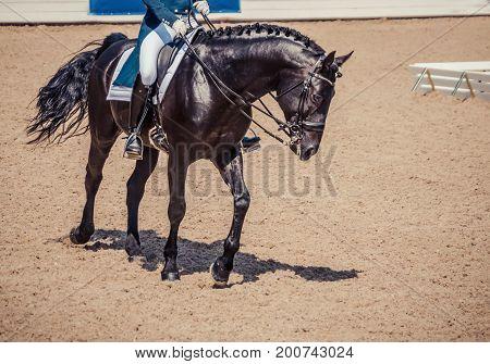 Dressage horse and rider. Black horse portrait during dressage competition. Advanced dressage test.