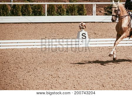 Dressage horse and rider. Cream horse portrait during dressage competition. Advanced dressage test. Copy space for your text.