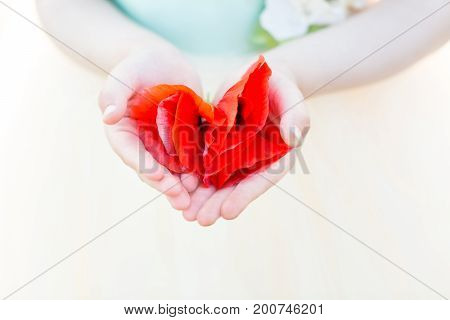 nature, flora, tenderness, childhood, childcare - closeup of little tender palms of child holding few bright scarlet buds of poppy flowers